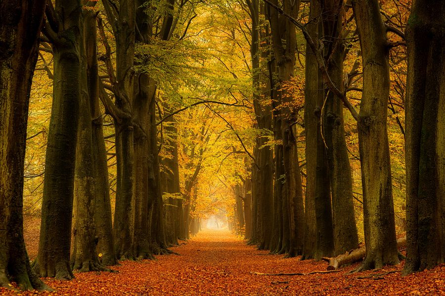 Herfst bos op een regenachtige dag, nog steeds prachtige kleuren