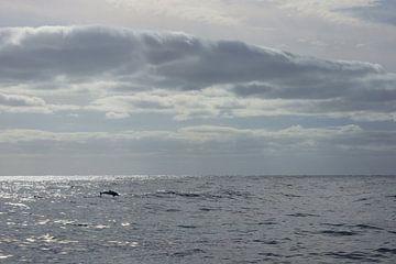 Dolfijn in de Atlantische Oceaan van Michel van Kooten