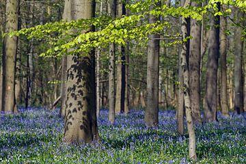 Haller forest sur