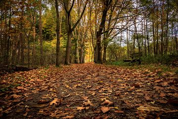 Waldweg auf der Veluwe (NL) von Carla van Zomeren