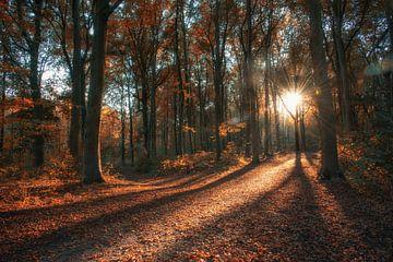 Sonnenpfad von Rogier Kwikkers