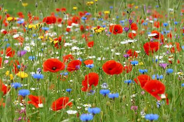 Wilde bloemen tuin van Ad Jekel