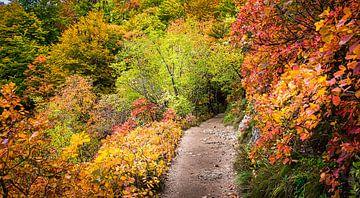 Fußweg durch den herbstlichen Wald, Kroatien von Rietje Bulthuis
