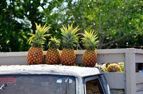 Ananasverkoper op de markt van Uman (Mexico)