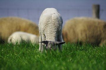 My first Grass sur Harry Kool