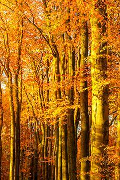 Sonniger Wald während eines schönen nebligen Herbsttages mit braunen goldenen Blättern. von Sjoerd van der Wal