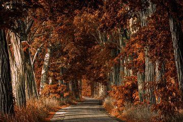 Roststraße von Lars van de Goor