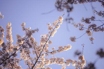 Blütenfoto im Blühgarten Amstelveen von Joyce van Galen