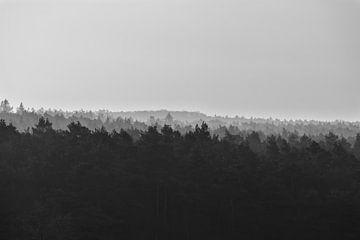 Loenermark, uitzicht over de boomtoppen, zwart wit