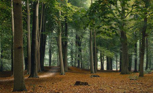 Wind in het bos van