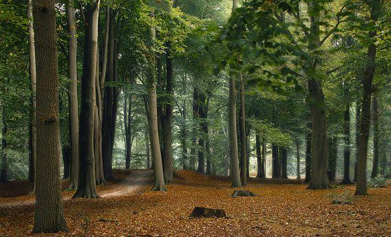 Wind in het bos