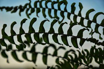 Silhouette plant von Evelien Doosje