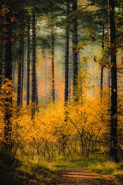 Chemin de randonnée à travers la forêt colorée de Westenschouwenen sur Michel Seelen