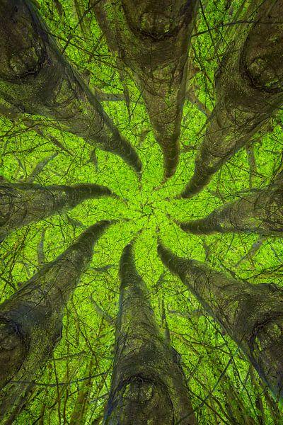 Mandala Trees (1) van Mark Scheper