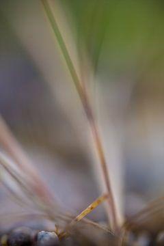 Gras von Robert Wiggers
