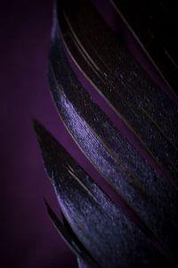 De paarse veer