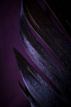 De paarse veer van AnyTiff (Tiffany Peters)