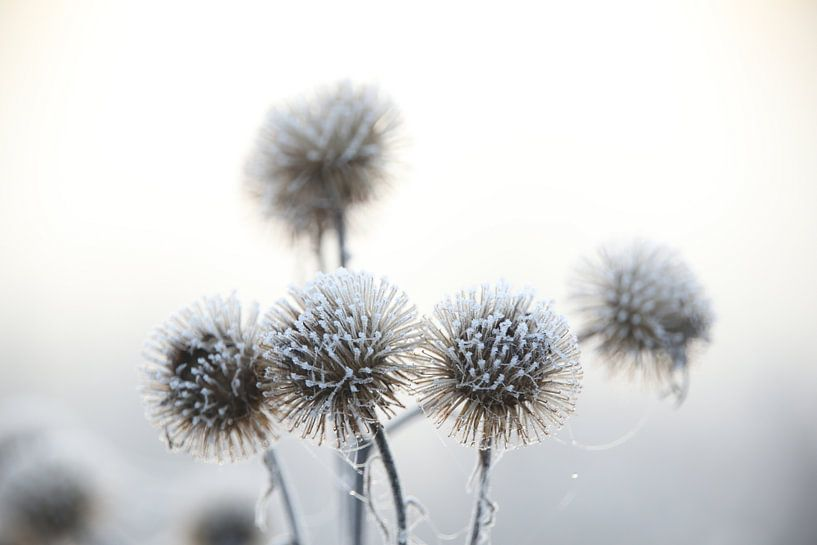Wintertime van John Arts