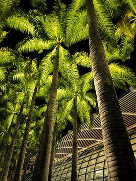 Palmen bei Nacht am Marina Bay Sands von Heiko Obermair