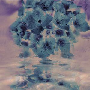 Hortensienspiegel - blau pastell