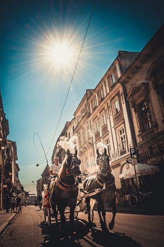 Paarden Krakow (Polen) van