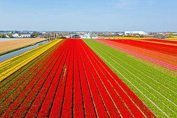 Luchtfoto van bloembollen velden bij Lisse in Nederland van Nisangha Masselink