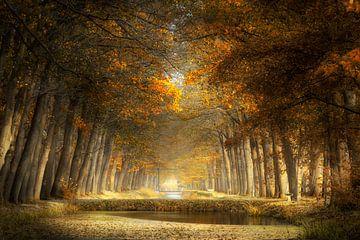 Jahreszeit in der Sonne von Kees van Dongen