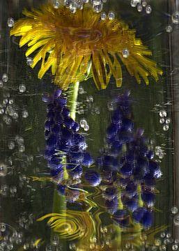 Sparkling - paardebloem en druiven hyacint van Christine Nöhmeier