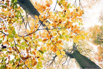 Double tree van Marieke van der Doef