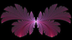 Flutterby Butterfly van