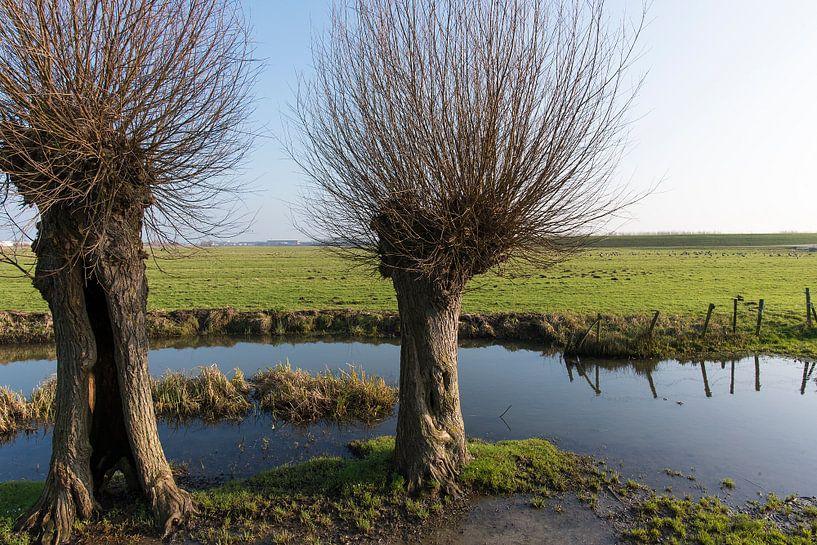 polder landschap met knotwilgen van Jan Pott