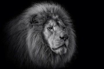 De koning van