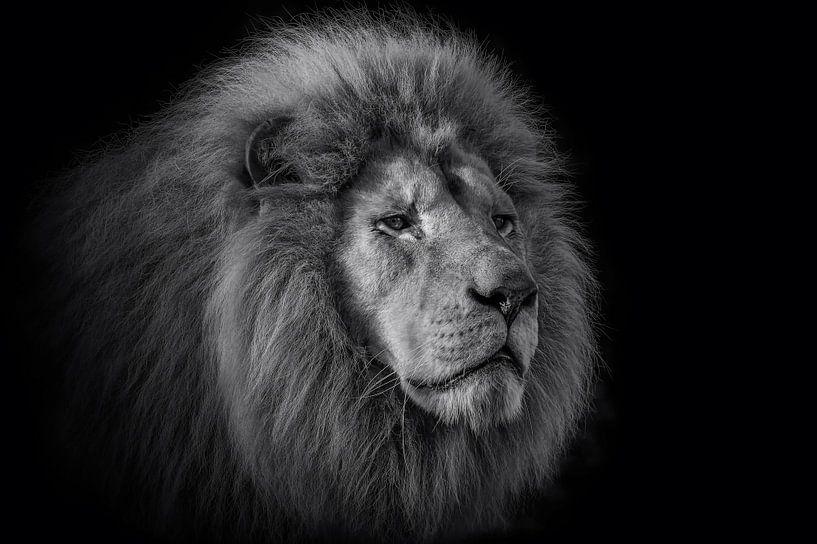 De koning van Ron Meijer Photo-Art