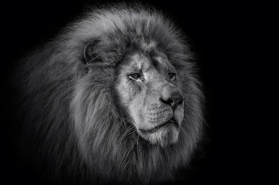 De koning van Ron Meijer