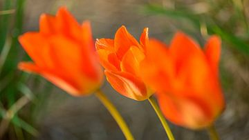 Blumenwelt van Dirk Herdramm