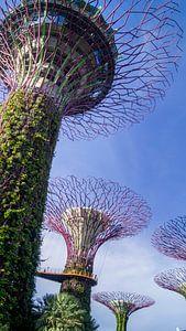 Supertree Grove - Singapore