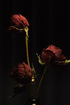 Stilleven van drie rozen in een vaas van Lisanne Rodenburg