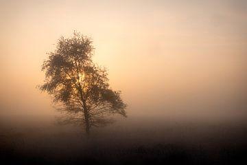 Gouden morgen 2 van Maarten Kooij