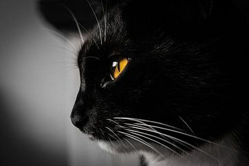 Portraitkatze schwarz-weiß von Paul Poot