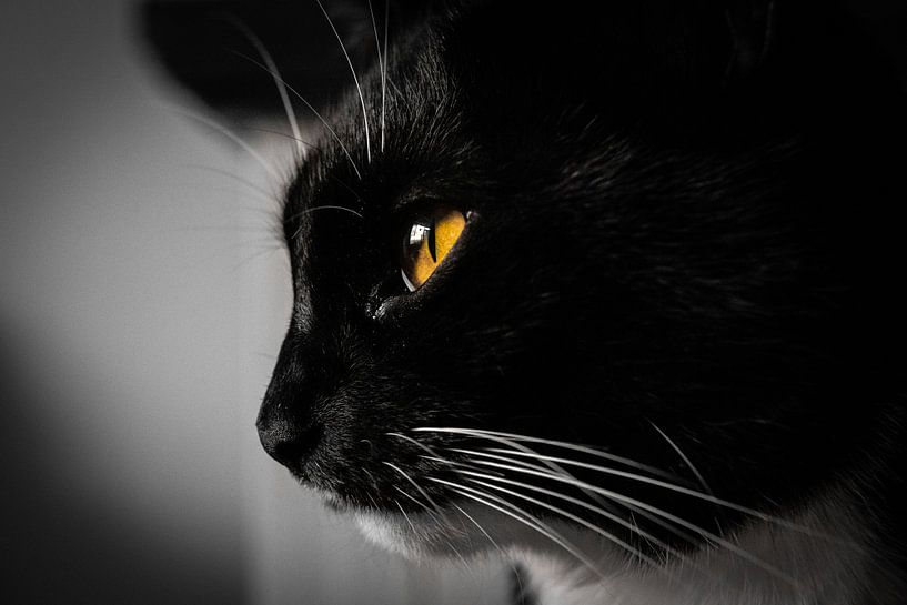 Portret kat zwart/wit van Paul Poot