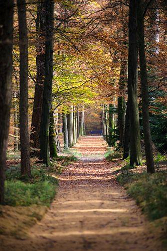 Doorkijk van wandelpad in het bos