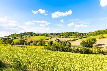 Toscane von Fotostudio Foto-DP