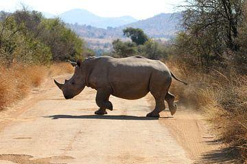 Neushoorn Zuid Afrika van