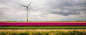 Tulpen in Flevoland van René Holtslag