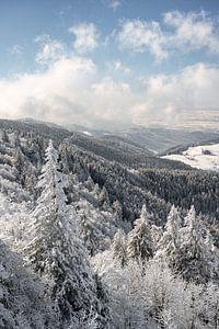 Winterwald von Michael Valjak