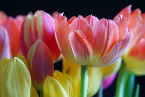 Tulpen van Ineke Klaassen