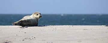 Zeehond op het strand van Düne van Antwan Janssen