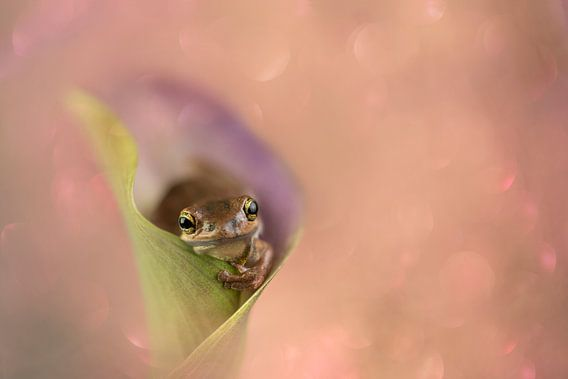 flower love van Lia Hulsbeek Brinkman