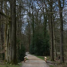 Een grindpad met een brug van Gerard de Zwaan