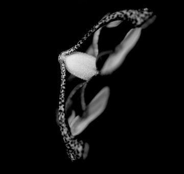 Passionsblume schwarz und weiß von Esther Erkelens